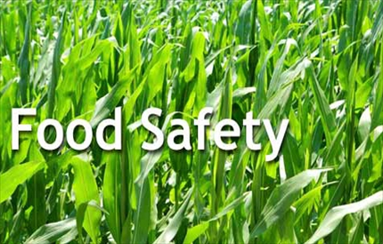 home-page-food-safety